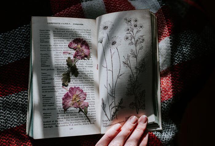 小さなお花を長く楽しむためには、押し花にするのもおすすめ。花びらの開きのピークが過ぎた状態で押し花をすると美しい仕上がりにならないことがあるので、変色したり枯れたりする前の綺麗な状態で作るのがよいでしょう。