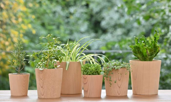 一度植えると植えっぱなしにしがちなグリーンたち。鉢を変えたり、鉢カバーを変えると気軽に気分転換することが可能です。お部屋のカーテンを変えるように、たまにはおうちのグリーンを模様替えしてみない?