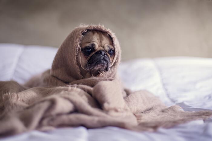 朝スッキリと起きられないあなたに、まずは質問。  [Q] あなたが起きられないのは、「もうどうしても眠くて起きられない」からですか? それとも「なんとなくダラダラしてしまって起きるタイミングを逃している」からですか?