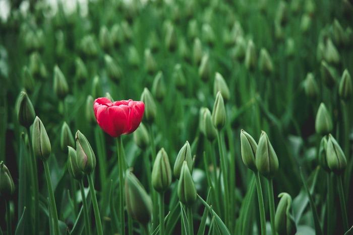 無理に上昇志向を持とうとせず、平均点を保つのも決して悪くはありません。大切なのは、それが自分の幸せだと思えること。今の場所で自分らしい花を咲かせるか、もっと別な結果を生むための何かを目指すか、なりたい自分をイメージしましょう。