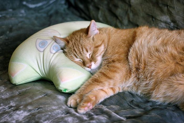 気に入っている枕ほどいつまでも使い続けていたいものですが、残念ながらどんな素材を使った枕にも寿命があり、買い替え時がやってきます。ポリエステル綿の耐用年数は1年~3年。ホコリを溜め込みやすい素材なので、弾力が失われた頃には枕の交換を考えましょう。ウレタンの場合は復元性がなくなってきたら替え時ですし、寿命の長いパイプやコルマビーズの枕でも、素材がつぶれてボリューム感がなくなってくる3~5年で買い替えるのがおすすめです。
