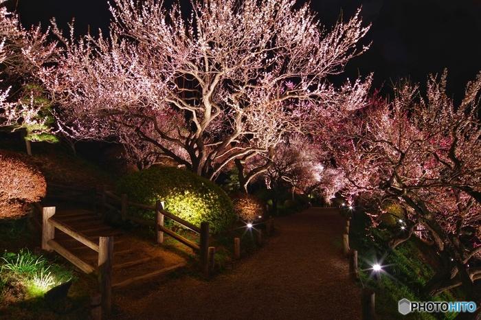 桃色に包まれた風景に魅せられよう!関東地方(千葉・茨城)の梅の名所
