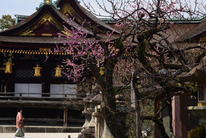 京都市上京区にある北野天満宮は、学業成就の神様、菅原道真公を祀った神社で全国に1万社以上ある天満宮の総本社となります。