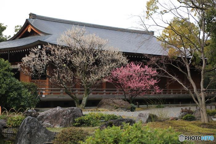 優雅に咲く梅と境内とが織りなす光景は、思わず息を呑むほど美しく、眼前の風景は、まるで浮世絵のような素晴らしさです。