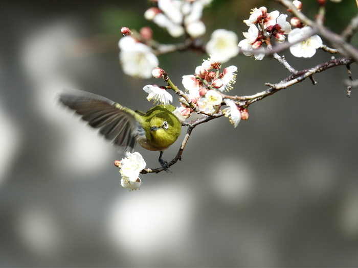 桃色に包まれた風景に魅せられよう。近畿地方(京都)での梅の名所6選