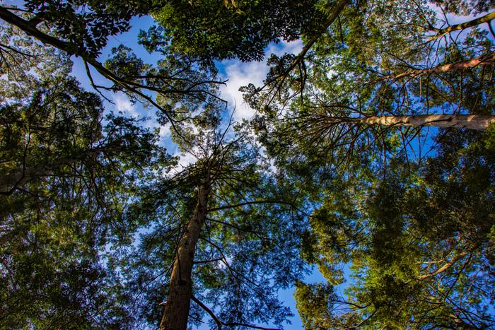 無料で入場することができる南禅寺境内には、大きく成長した樹々がたくさん植樹されています。大きな木の下に立って空を見上げてみましょう。木の葉の間に見える青空は美しく、身も心も癒されるような不思議な感覚を味わうことができることでしょう。