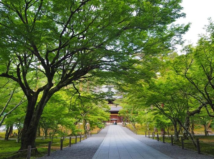 また三門周辺は、大きな樹々がたくさん植樹されており、まるで広い公園のような佇まいをしています。新緑の季節に南禅寺三門を訪れると森林浴をしているような気分を味わうことができます。