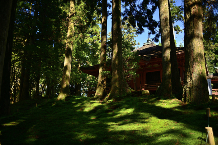 山全体が境内となっている延暦寺では、杉などの巨木が無数に植栽されています。天を突くほどに大きく育った巨木の葉の間から射し込む木漏れ日は気持ちよく、境内を歩いていると森林浴をしているような気分を味わうことができます。