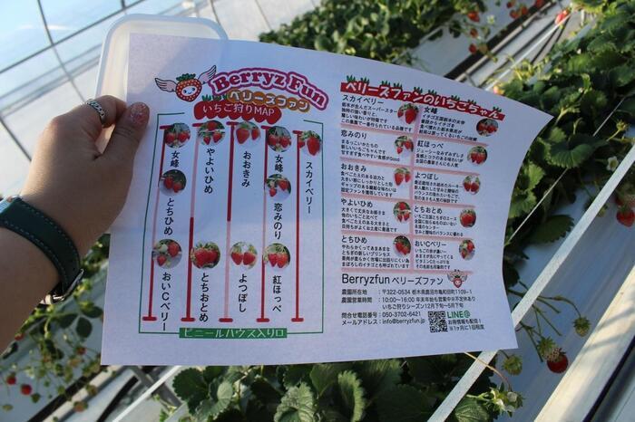 いろんな種類のいちごを食べ比べてみたいなら、鹿沼市にある「ベリーズファン」に足を運んでみませんか?栃木を代表するとちおとめ・スカイベリー・とちひめ・女峰のほかに6品種、計10種類の食べ比べができますよ。
