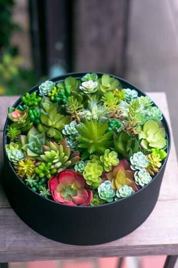 ころころと可愛らしく、ユニークな姿の多肉植物たち。株分けして簡単に増やせるので、プレゼントとして贈ってもいいでしょう。