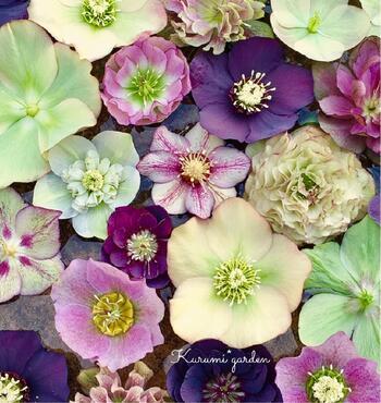 生け花用の水盤に水を張り、花首を短く切ってお花を浮かべてみても素敵です。色とりどりのお花が一面に咲いたようで、心が華やぎますね。