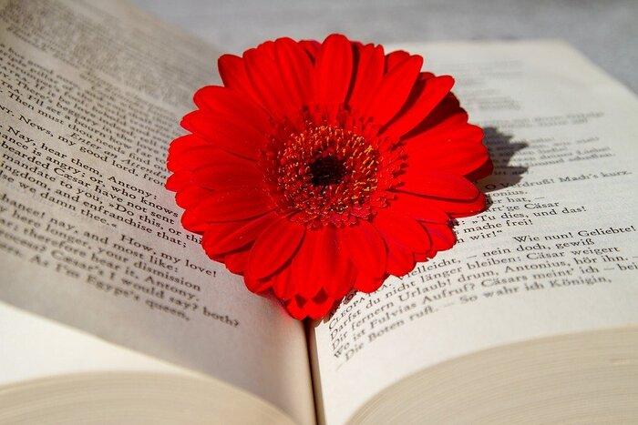 テーブルに飾る花も花言葉を知っていれば、さらに楽しむことができます。たとえば、赤いガーベラは「神秘の愛、前向き、限りなき挑戦」など。受験シーズンも佳境に入るこの時季、テーブルにさりげなく応援のメッセージを込めてみては。