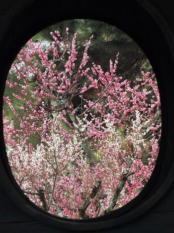 片岡梅林は、重要文化財となっている円窓亭の周囲に広がっています。円窓亭から眺める梅林もまた風情があります。