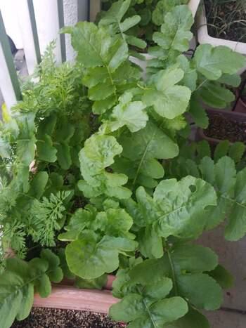 いろいろな種類の野菜をベランダで育ててみるのも素敵です。季節に合わせたものを収穫できますし、なにより新鮮なものを食べられます。自家製野菜なら、皮まで安心して食べられますね。