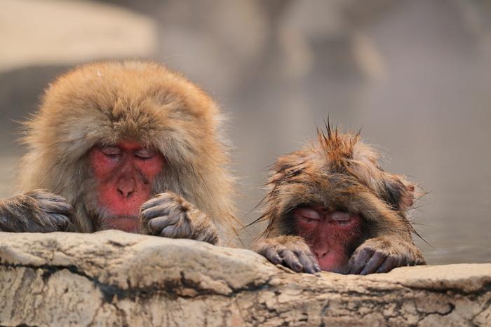 横湯川の上流、湯田中渋温泉郷のさらに山奥にある「地獄谷温泉」は、お猿さんが入浴することで知られる温泉地です。長野県の観光スポットの中でも特に有名で、県内外や海外からも多くの観光客が訪れます。