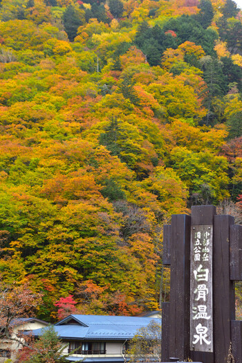 長野県と岐阜県の県境、北アルプスの中腹にある「白骨(しらほね)温泉」。昔から湯治場として栄えた名湯で、現在は国民保養温泉地に認定されています。そのお湯は「3日入れば3年は風邪をひかない」と言われるほど、効能高いお湯。周囲を山々に囲まれた、静かな雰囲気の温泉地です。