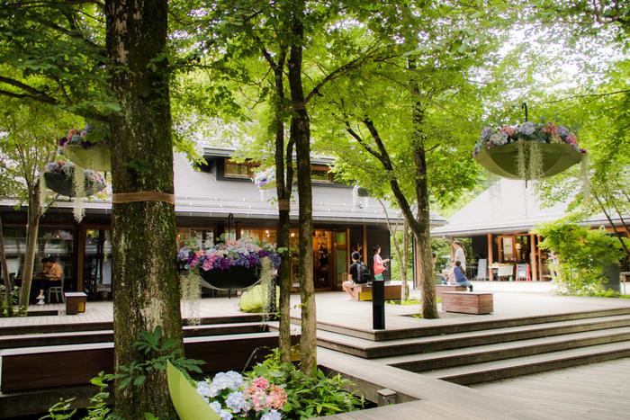 軽井沢では現在、「軽井沢星野エリア」として、温泉や宿泊施設、レストランやレジャースポットなどが展開されています。写真はエリアの中心部にある「ハルニレテラス」の様子。レストランやカフェ、雑貨屋さんなどが集まるエリアで、周囲には100本以上のハルニレの木が生い茂る、自然と調和した小さな街です。
