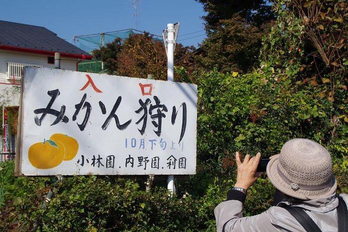 武蔵村山市にある「小林農園」は、都内でみかん狩りができる珍しい農園です。1960年頃からみかんの栽培を行っていて、60アールの畑に約500本のみかんの木が植えられています。