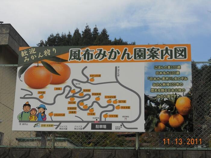 みかん栽培の北限エリアのひとつとされているのが、埼玉県寄居町の風布地区。その歴史は古く、天正年間から400年以上も栽培されています。