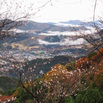 桜山公園の冬桜は、11月中旬~12月中旬に見ごろを迎えます。ちょうどみかん狩りのシーズンなので、ぜひ公園にも立ち寄ってみてください。