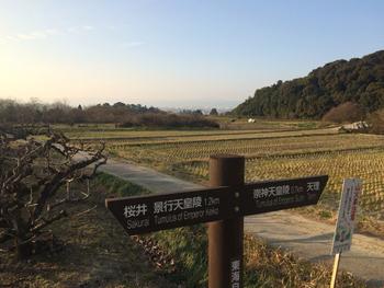 桧原神社や景行天皇陵などの史跡が点在する奈良県桜井市で、みかん狩りを楽しむなら「森岡祥章観光果樹園」がおすすめです。