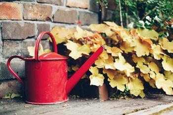 冬もガーデニングを楽しむために*寒さに強いお花&多肉植物と育て方のコツ♪