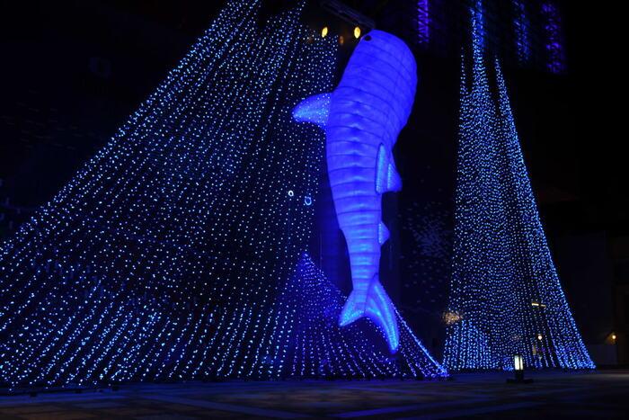 冬の海遊館前の広場は、幻想的な光の海となります。様々な海の生き物たちのイルミネーションオブジェが出現しますが、最も見応えがあるのは、全長約20メートルのジンベエザメのオブジェです。冬の海遊館周辺でフォトジェニックな時間をお楽しみください。