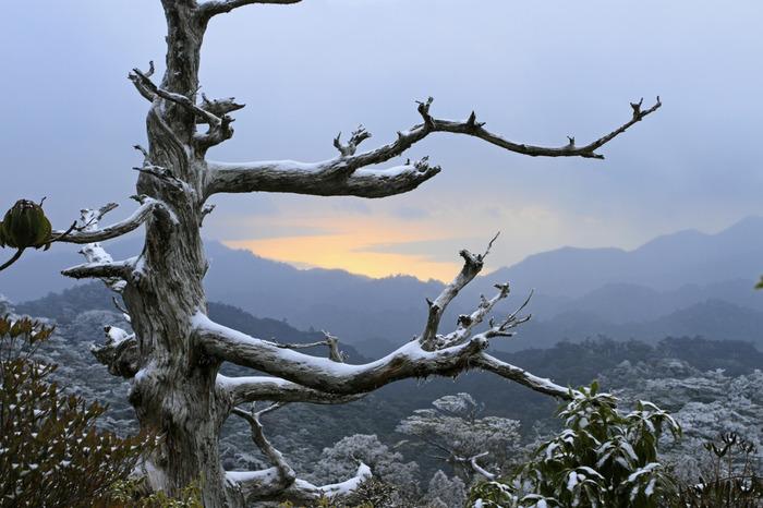 登山は中級者向けになる雪の積もった季節には、屋久島の違った一面が見られるシーズンです。観光客の少ない時期なので、絶景スポットを貸し切り状態で楽しめる可能性も。たんかんなどの冬ならではの味覚を楽しめるのも特徴です。