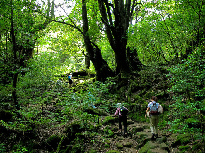 初めての屋久島なら縄文杉を見るのが定番ですが、その他にも滝やマングローブを楽しんだり・・・と体力に合わせた観光の仕方が色々あります。見どころがいろいろなので、自分にあったプランを見つけてみて下さいね!