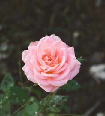 今、報われない恋や理解されない状況に立たされているとしても、それはいつか幸せになるために、今よりさらに成長するために必要なことなのかもしれません。花が咲き誇る時を待ちましょう。