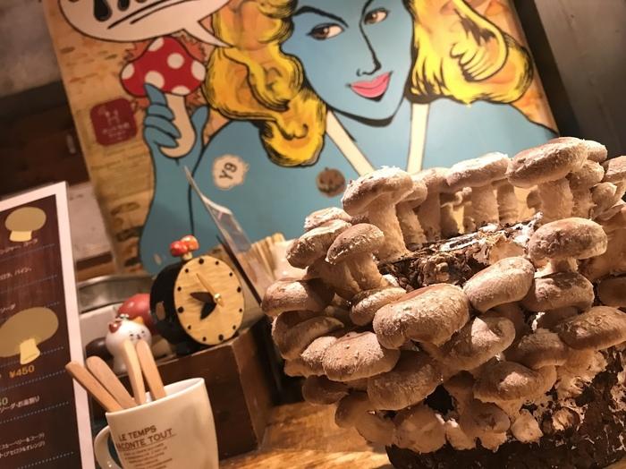 きのこ好きならぜひ挑戦したい、きのこ狩りがテーブルでできるお店が大阪の梅田と並ぶ繁華街、心斎橋にあります。「きのこ料理専門店 きのこの里」はきのこのよいところを存分に活かした、お店オリジナルの創作きのこ料理が食べられます。