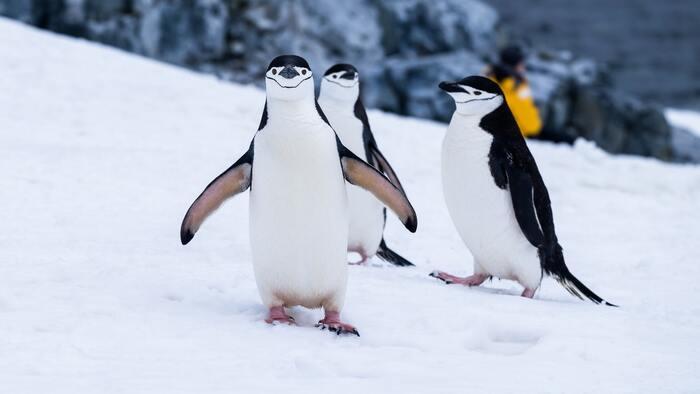 シンプルでおしゃれなイラストのような画面で、タップや放置する事で島を大きくしていくゲームです。役割によって色々なコスチャームを着たペンギンが登場したりアザラシなどの動物が現れるので、画面の中で自由に動く動物を眺めるだけでも和みます。