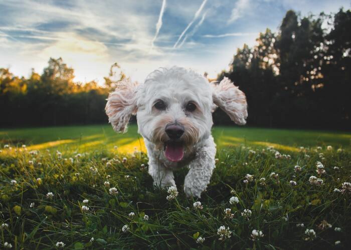 心優しいケイティのもとで暮らしていたマックスでしたが、大型の犬デュークが新たに家にやってきた事で2匹の上位争いが勃発!ドタバタを繰り返していく中で、2匹はトラブルに巻き込まれ迷子に・・・。ケイティのもとに帰るための奮闘が始まります。