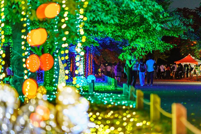イルミナイト万博が開催されている期間中は、万博記念公園内に植樹されている樹々にもライトアップや電飾が装飾されます。イルミナイト万博では、闇夜と光のアートが織りなす幻想的なひとときを楽しむことができます。