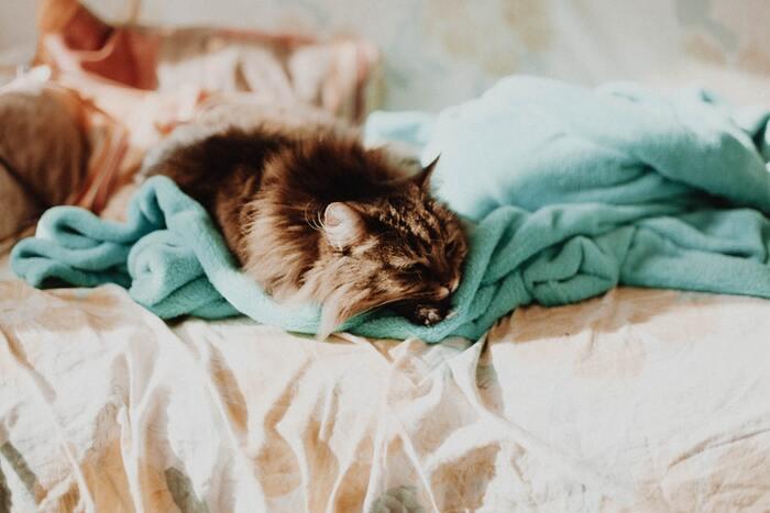 色の濃い毛布を洗う場合は、漂白剤の入っている洗剤を使用すると色落ちしてしまうので、注意が必要です