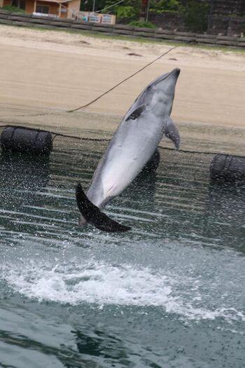 イルカが泳いだりジャンプしたりする様子を間近に見られるだけでなく、餌をあげたり握手をしたりできます。背びれにつかまって一緒に泳いだりすることもできて、一日楽しめるスポットになっています。
