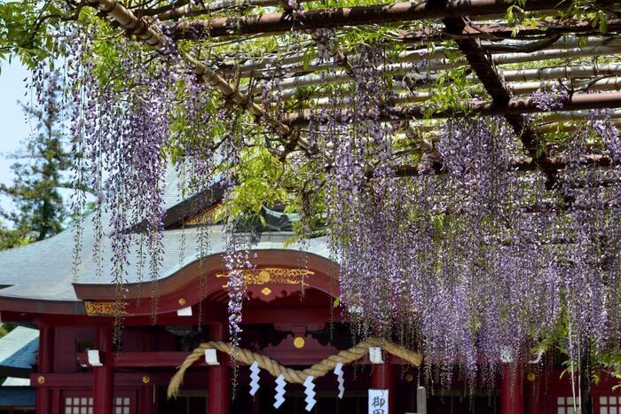 """焼き物の里""""笠間""""は、古くから「笠間稲荷神社」の鳥居前町として栄えてきた町でもあります。  歴史深い笠間には、稲荷神社の他にも「愛宕神社」や「六所神社」、「佐志能神社」等など、由緒ある神社が数多く点在しています。以下では、一度は足を運びたい「笠間稲荷神社」、平成に建立された出雲大社の分社「常陸国 出雲大社」の二社に絞って紹介します。【藤咲く5月初旬の「笠間稲荷神社」拝殿】"""