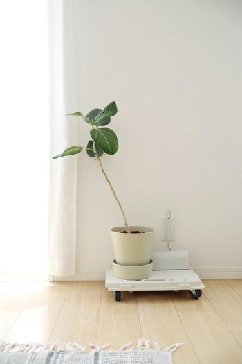 部屋の雰囲気を変えてくれる観葉植物。土がたっぷり入っていて動かすのは一苦労。重い物、移動させるのが大変なものはキャスターにのせて。 良品生活さんは、無印良品の「縦にも横にも連結できるポリプロピレン平台車」に鉢をのせています。キャスターが付いていると少しの力で移動できるので楽ですね。