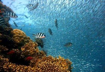 ヌメアの海の平均水温は約23℃〜27℃と比較的潜りやすいのが特徴。美しいサンゴ礁に、アシカやレオパードシャークなど様々な海の生物に遭遇できることでも有名です。是非ダイビングの組み込まれたツアーを選んでみてはいかがでしょうか。