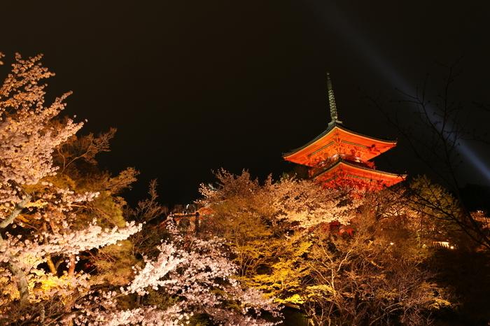桜が見ごろを迎える時季になると、清水寺では夜間のライトアップが行われます。ここでは、日中とは異なる雰囲気が漂う夜桜鑑賞を楽しむことができます。
