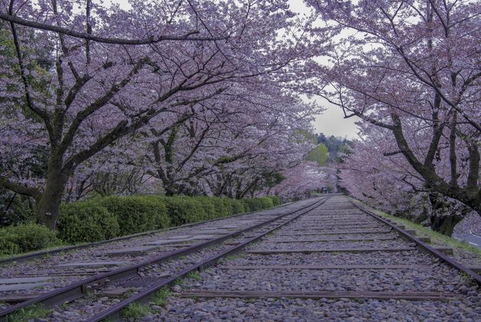 蹴上インクラインは、琵琶湖疎水の舟運ルートの一部として1948年まで使用されていた傾斜鉄道跡です。国の史跡として整備されている蹴上インクラインに敷かれたレールの両横は桜並木となっており、毎年春になると、大勢の花見客で賑わいます。