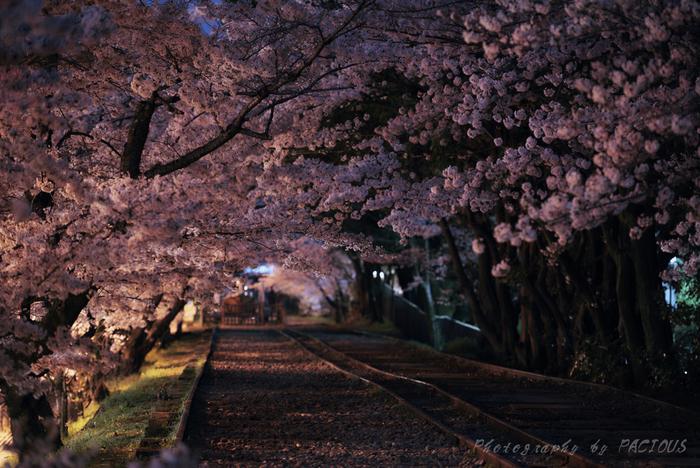 蹴上インクラインの桜並木では、夜間のライトアップが行われます。ここは、南禅寺、銀閣寺といった由緒ある寺院から近いこともあるので、日中は寺社仏閣めぐりを楽しみ、夜は蹴上インクラインで夜桜を楽しんでみるのもおすすめです。