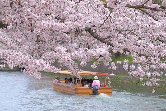 岡崎疎水では、南禅寺舟溜り乗船場から夷川ダムまでの区間約3キロメートルを十石舟で巡ることができます。十石舟に揺られながらのんびりと桜を臨むのも風情があっておすすめです。