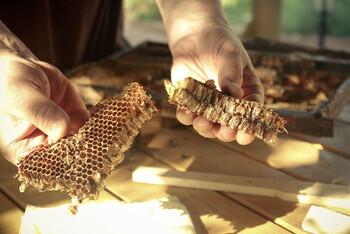 蜜蜂や蜜源の種類によって、蜜蝋の色や香りが異なってくるそうです。