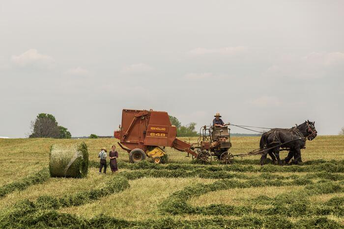 農耕や牧畜はアーミッシュの生活の基盤。馬に農耕機を引かせ、全員で農作業を行います。
