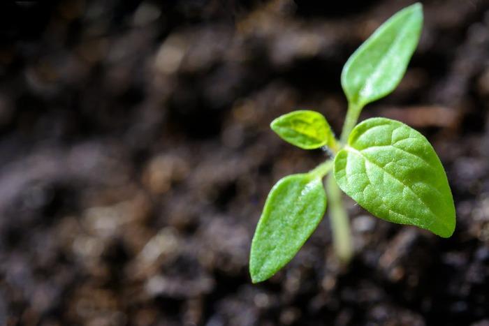 でも、ちょっと待ってください。「冬には植物が育たない」なんて思い込みかも。冬にこそおいしい野菜だってあるじゃないですか!冬の気候にあう植物なら、すくすく元気に育ってくれます。