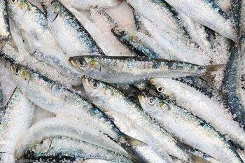 DHAやEPAも豊富なアジやイワシなどの青魚は、味わいがあり、しかもリーズナブル。どんどん食生活に取り入れたいですね。アジは、開きや塩焼きはもちろん、揚げたり煮たり、さまざまな調理法で使いましょう。