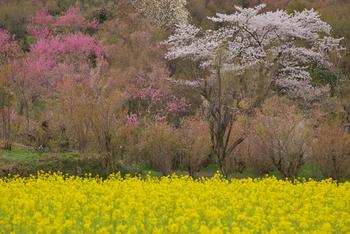 春にはお花見を兼ねてウォーキング。