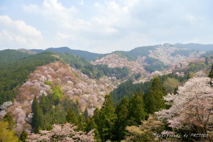 春爛漫とした陽気に包まれながら絶景を楽しもう♪桜の名所8選【奈良県編】