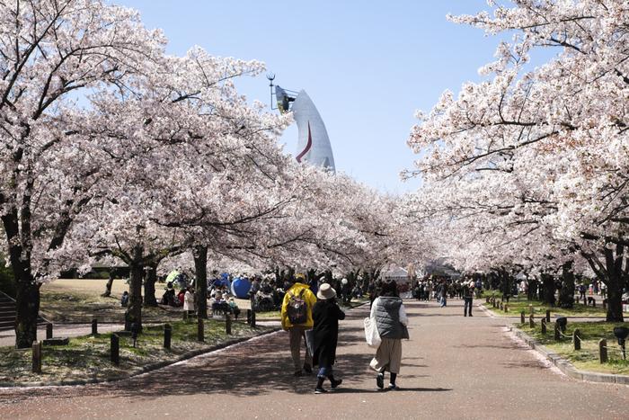 1970年に開催された大阪万博跡地に整備された万博記念公園は、大阪府北部を代表する桜の名所として知られています。公園内にはソメイヨシノを中心とした9種類、約5500本の桜が植樹されています。